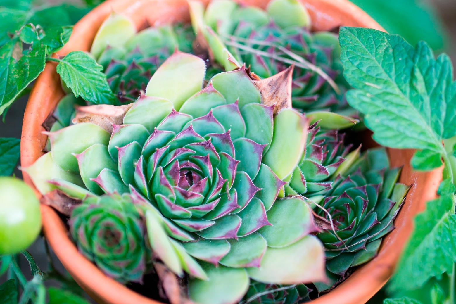 Color of the year inspiration: succulents come in beautiful shades of green